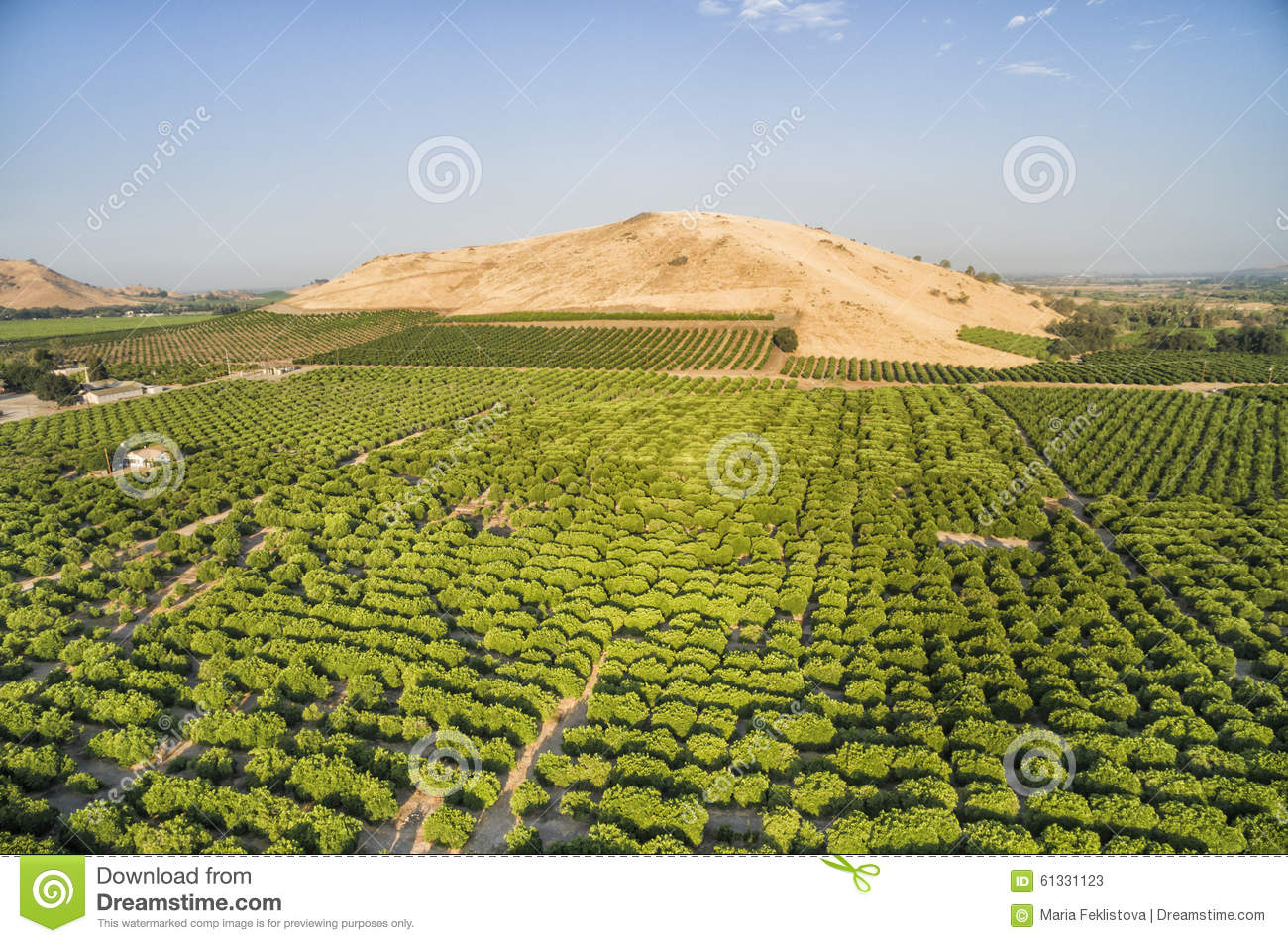 Tiny House Town Beautiful Seattle Tiny House: Overlooking View Of Orange Trees At Lemon Cove, USA Stock