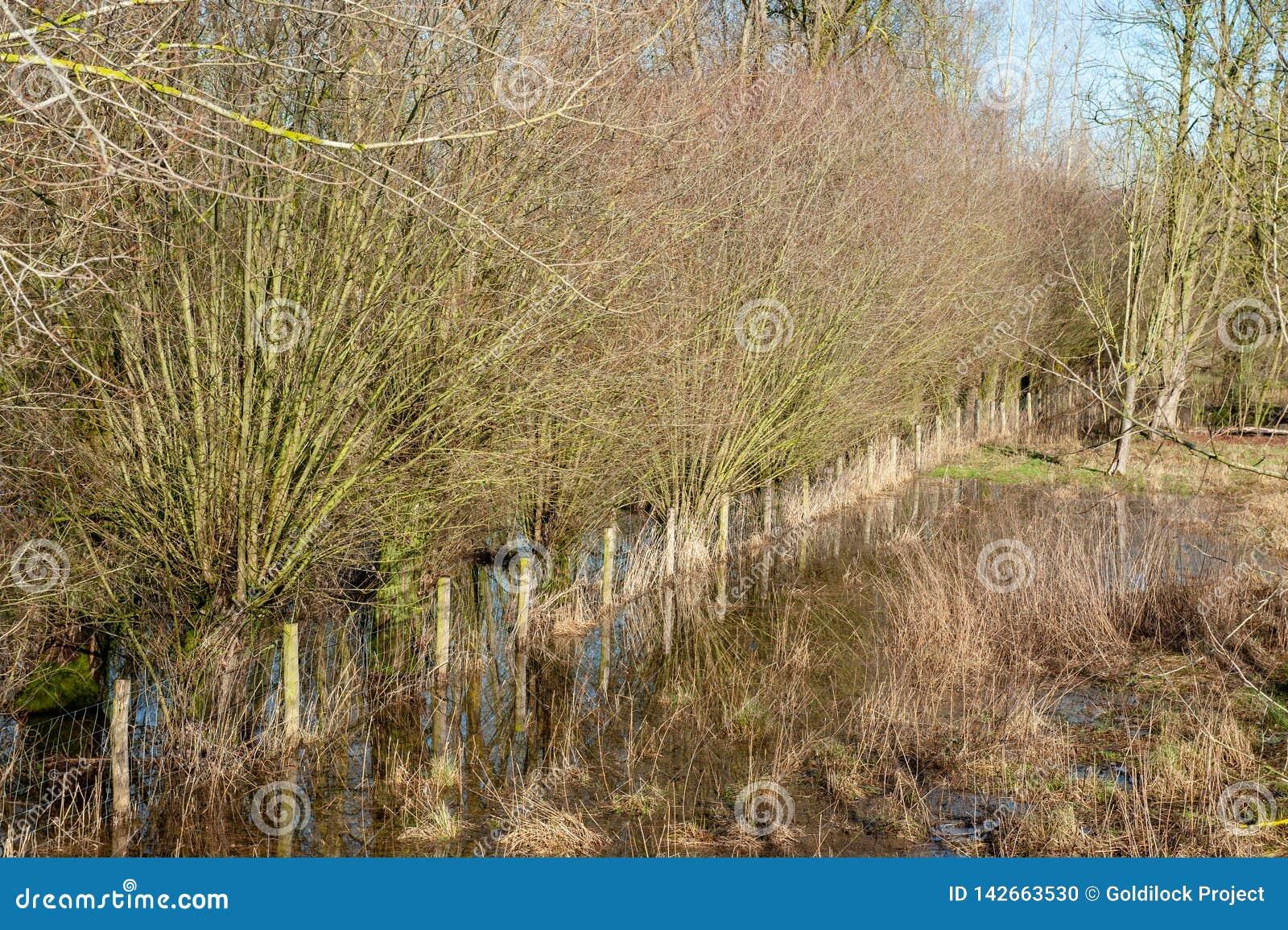Overstroomd Moerasland in oosten-Vlaanderen