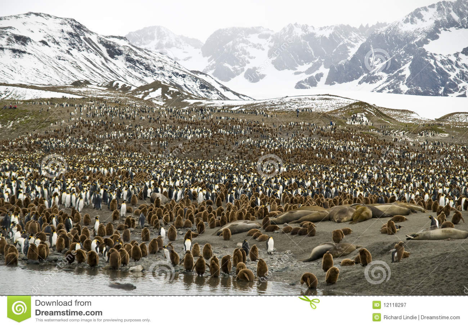 Overvolle Valleien - Pinguïnen, Zuid-Georgië