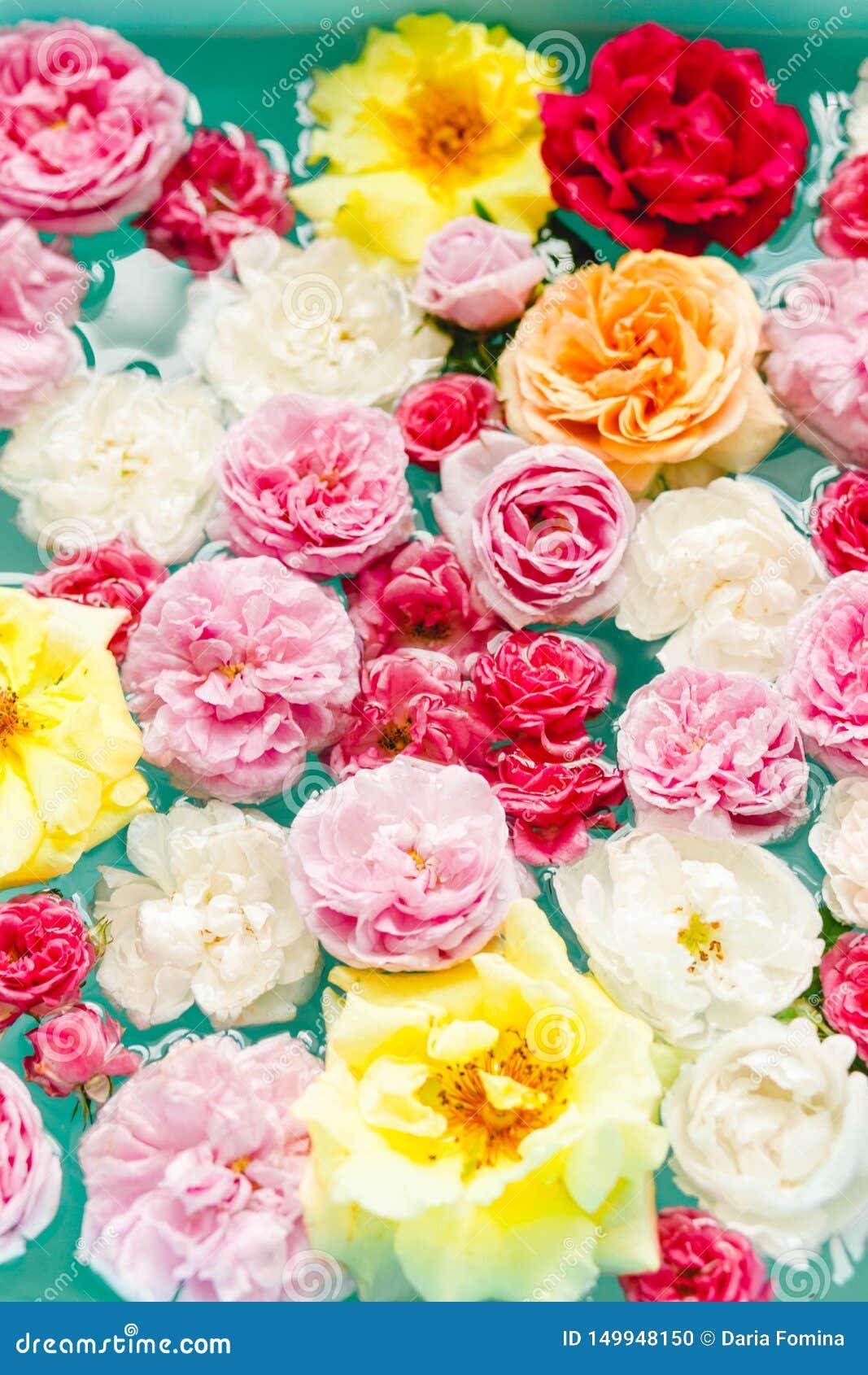 Overweldigende bloementextuur van kleurrijke rozen in water op blauwe achtergrond