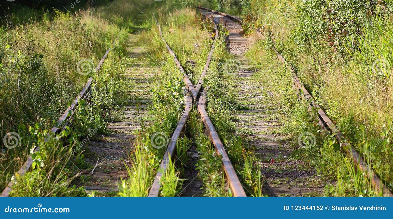 Overwoekerde oude spoorweg