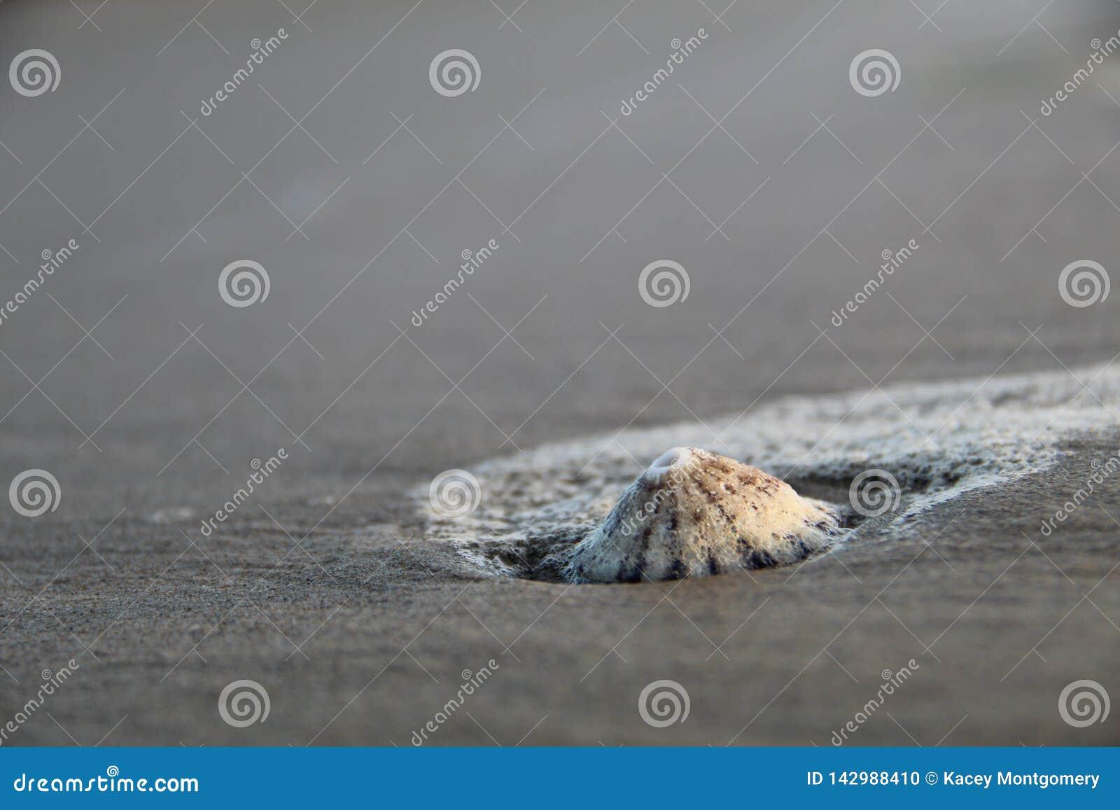 Overzees Shell op Strand