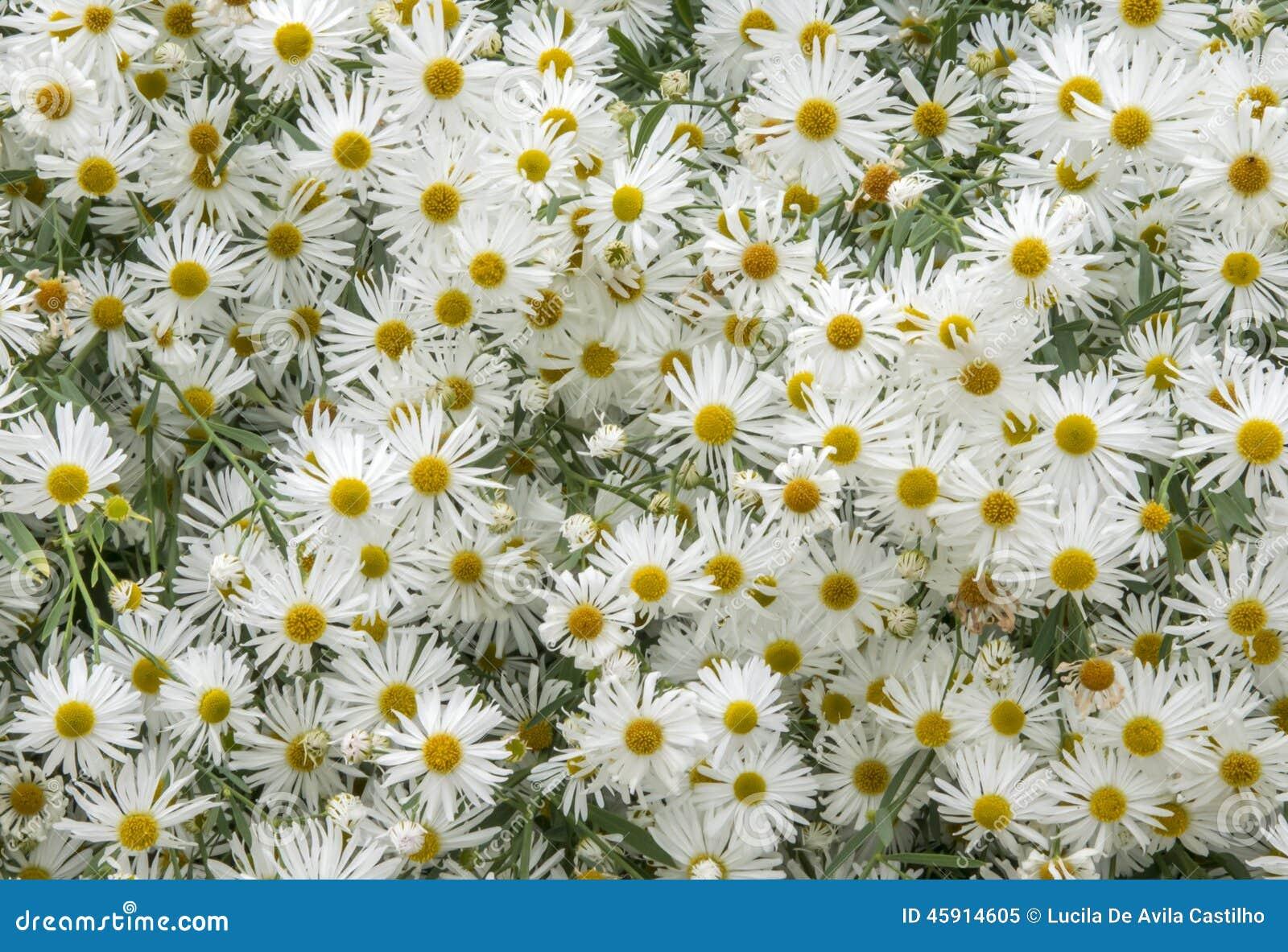 Overzees van bloemen