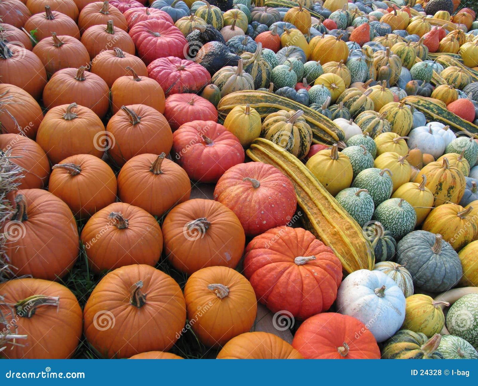 Overzees van kleurrijke gediversifiërde pompoenen