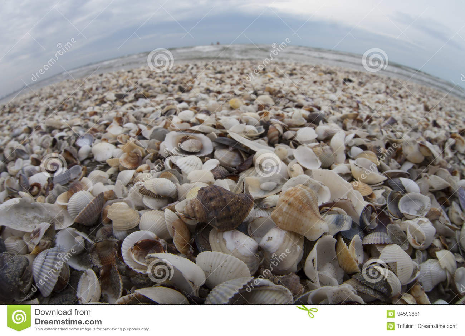 Overzees van shells
