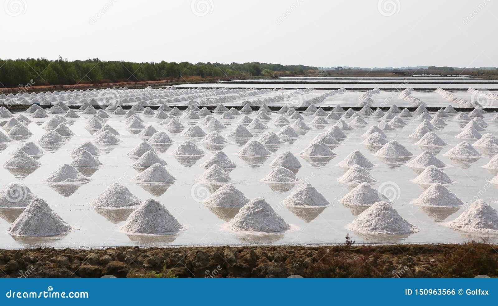 Overzees zout landbouwbedrijf in Thailand