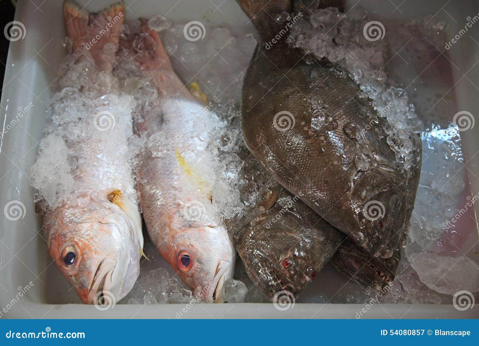 Overzeese baarzen en Spaanse makreel