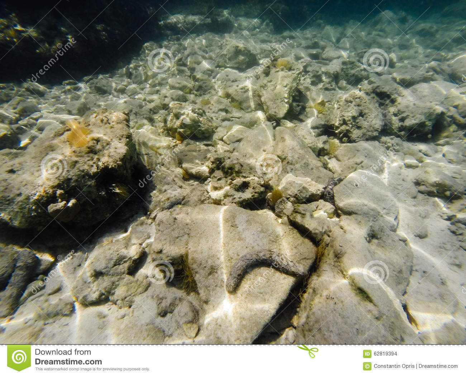 Overzeese bodem met zeewierinstallaties en cockleshell