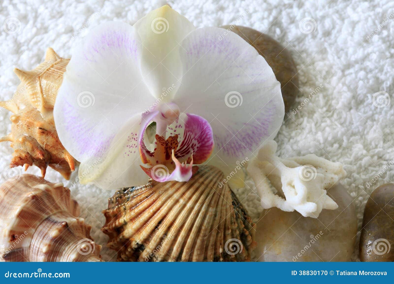 Overzeese cockleshells en orchidee