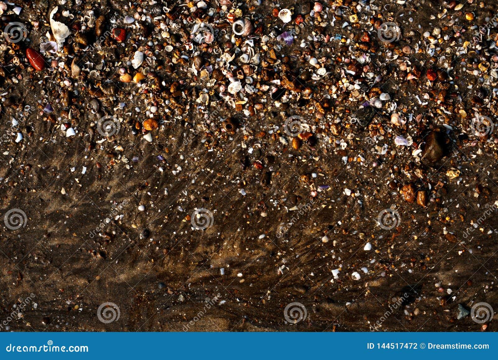 Overzeese die kust met shells en andere dingen wordt gevuld