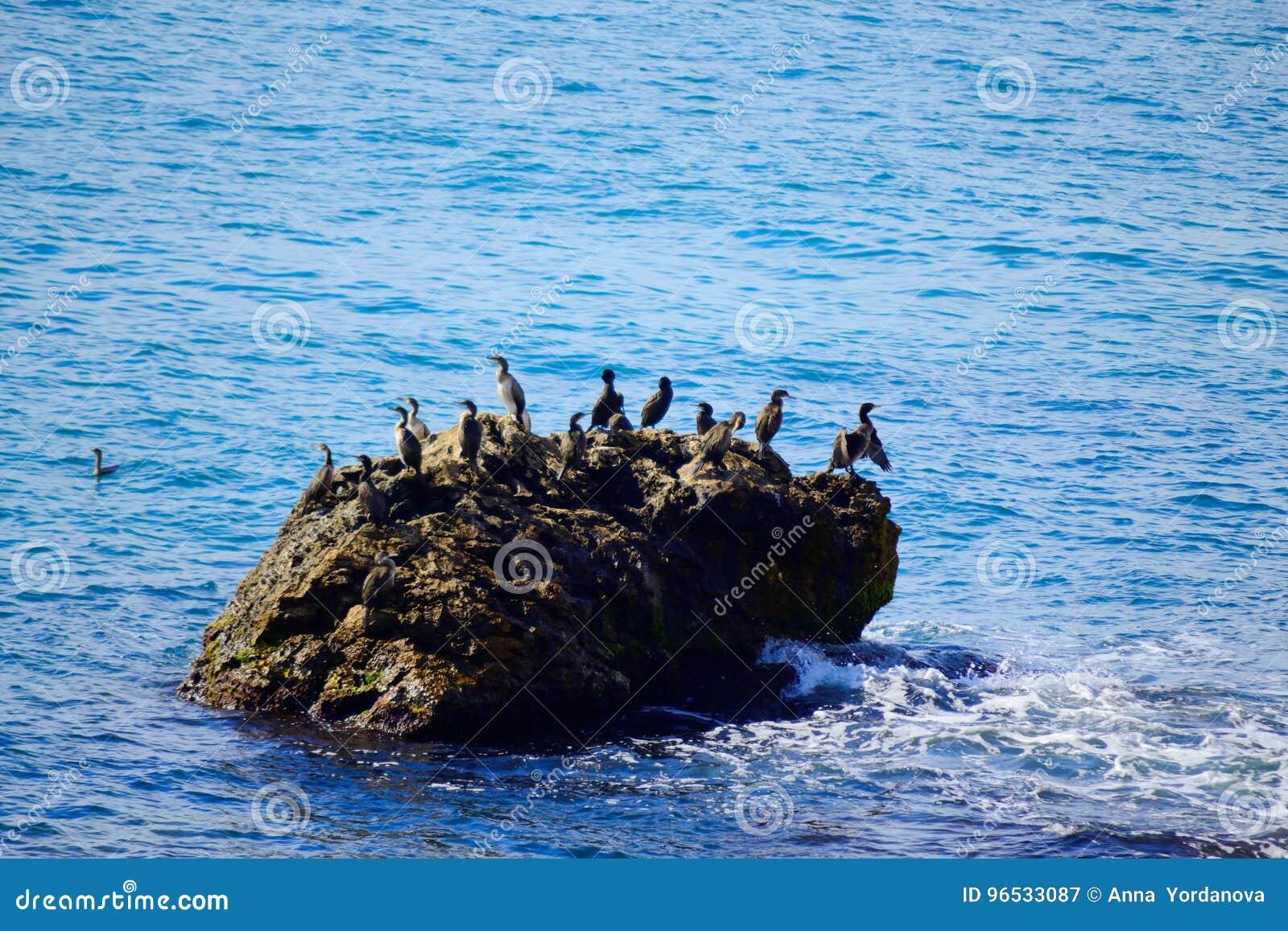 Overzeese rotsvogels