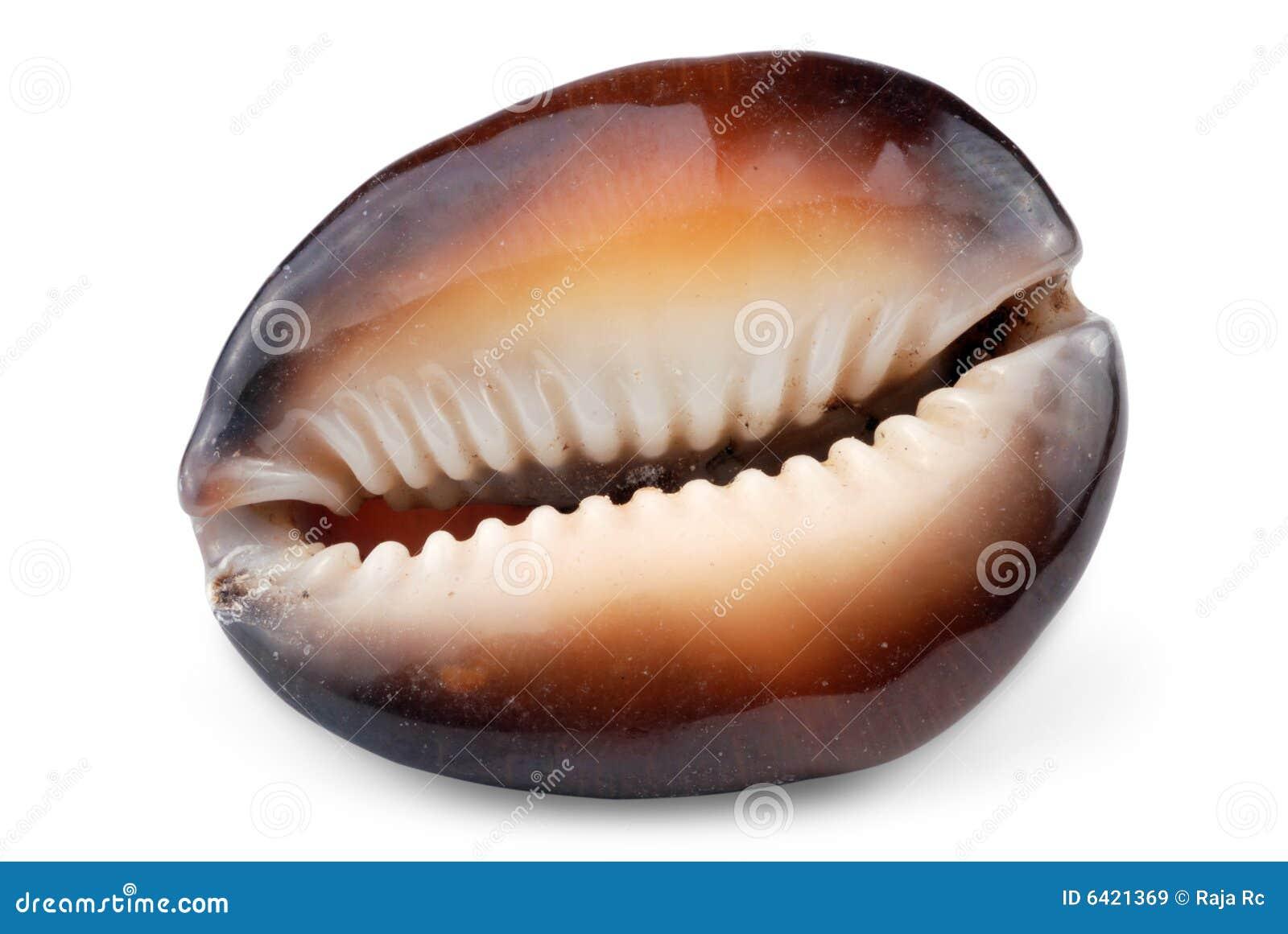 Overzeese shell