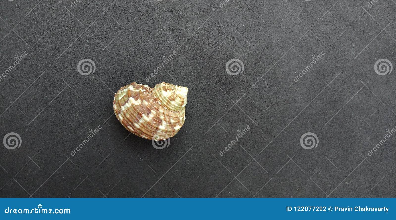 Overzeese shell met zwart geweven behang als achtergrond, strand Oceaan