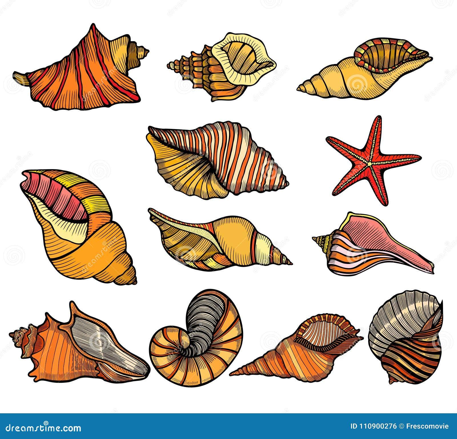 Overzeese shell reeks