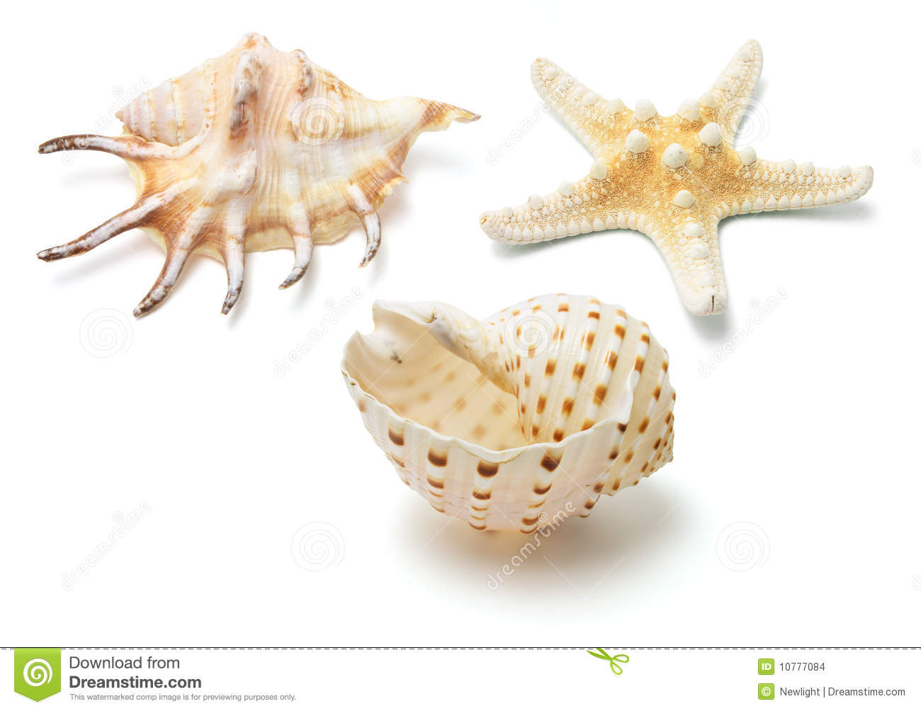 Overzeese Shells