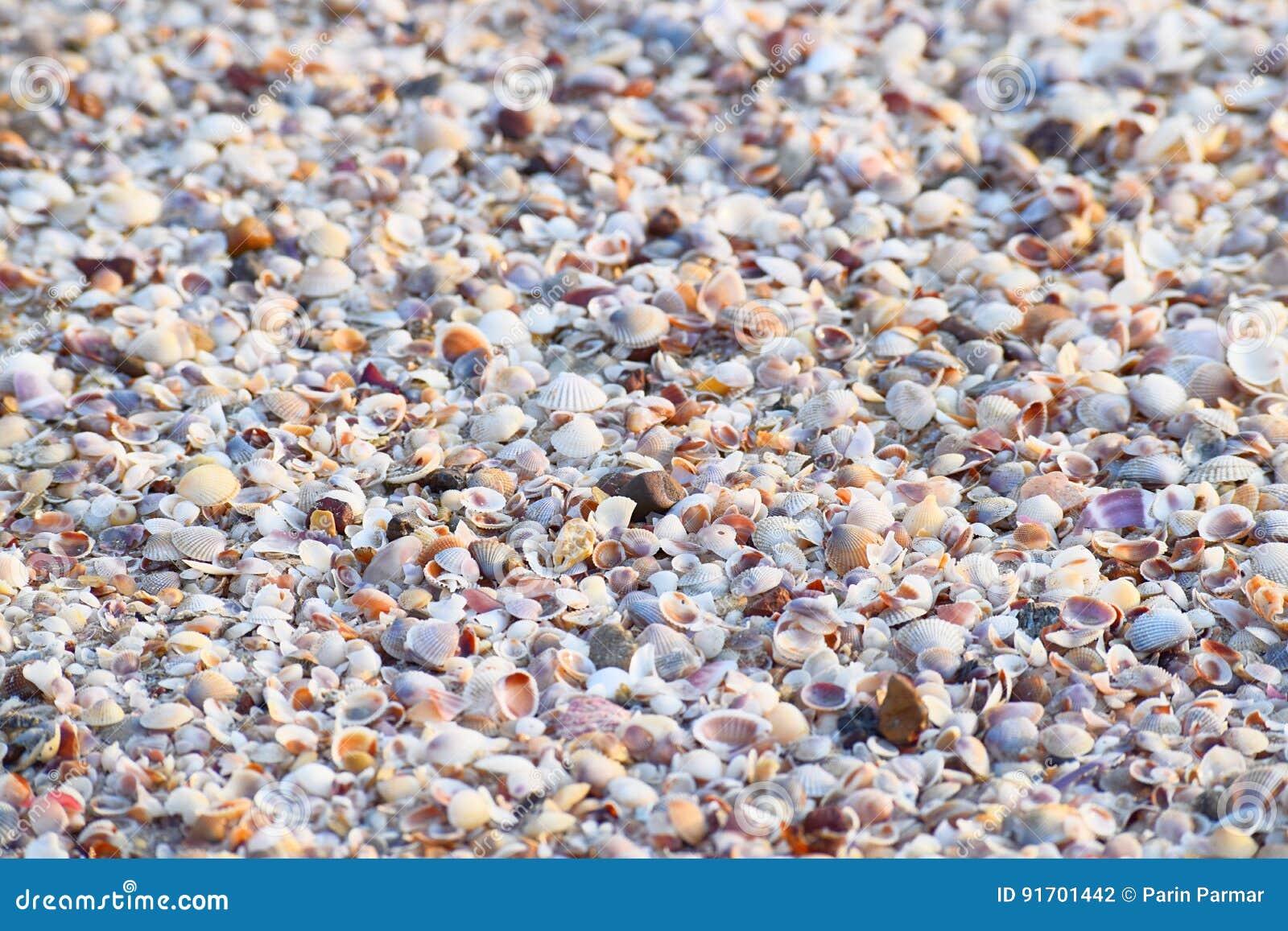 Overzeese Shells - Abstracte Marine Background