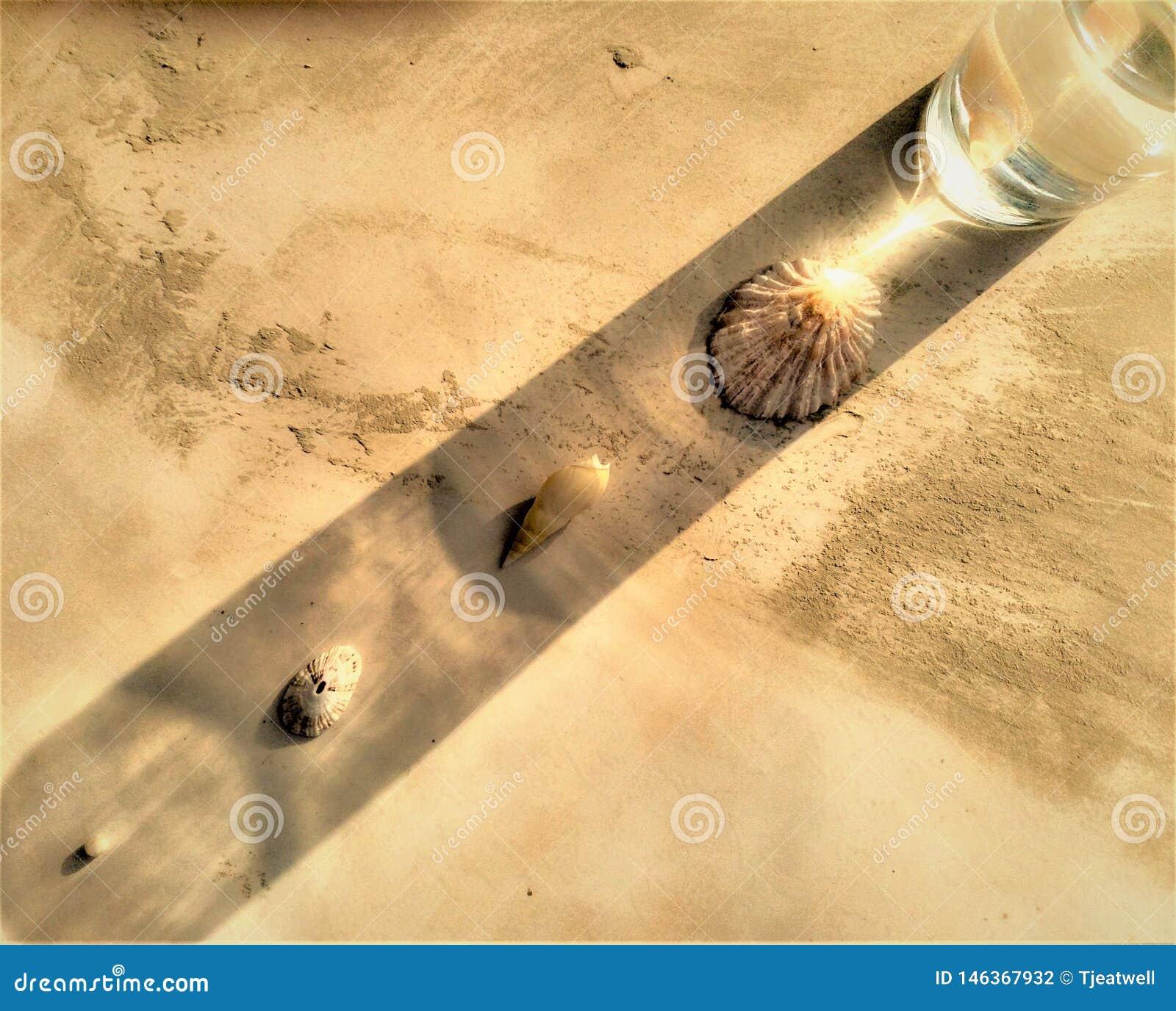 Overzeese Shells bezinning met een waterglas