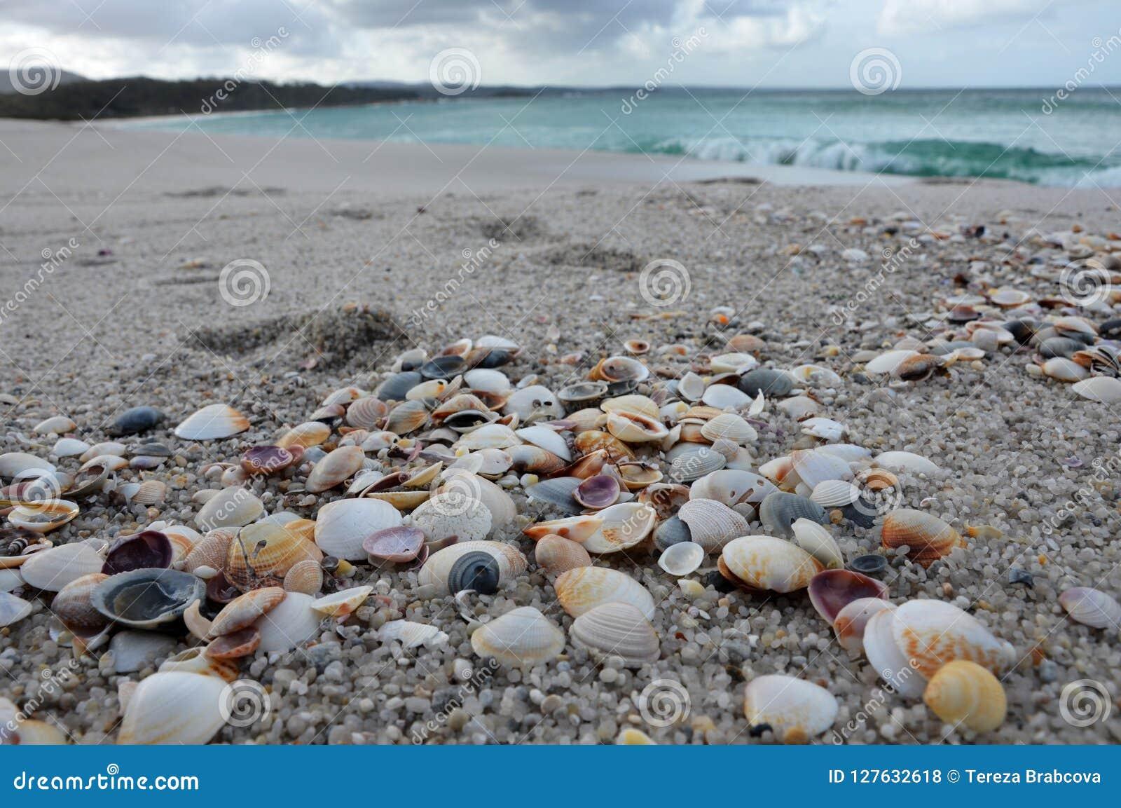 Overzeese shells bij het strand
