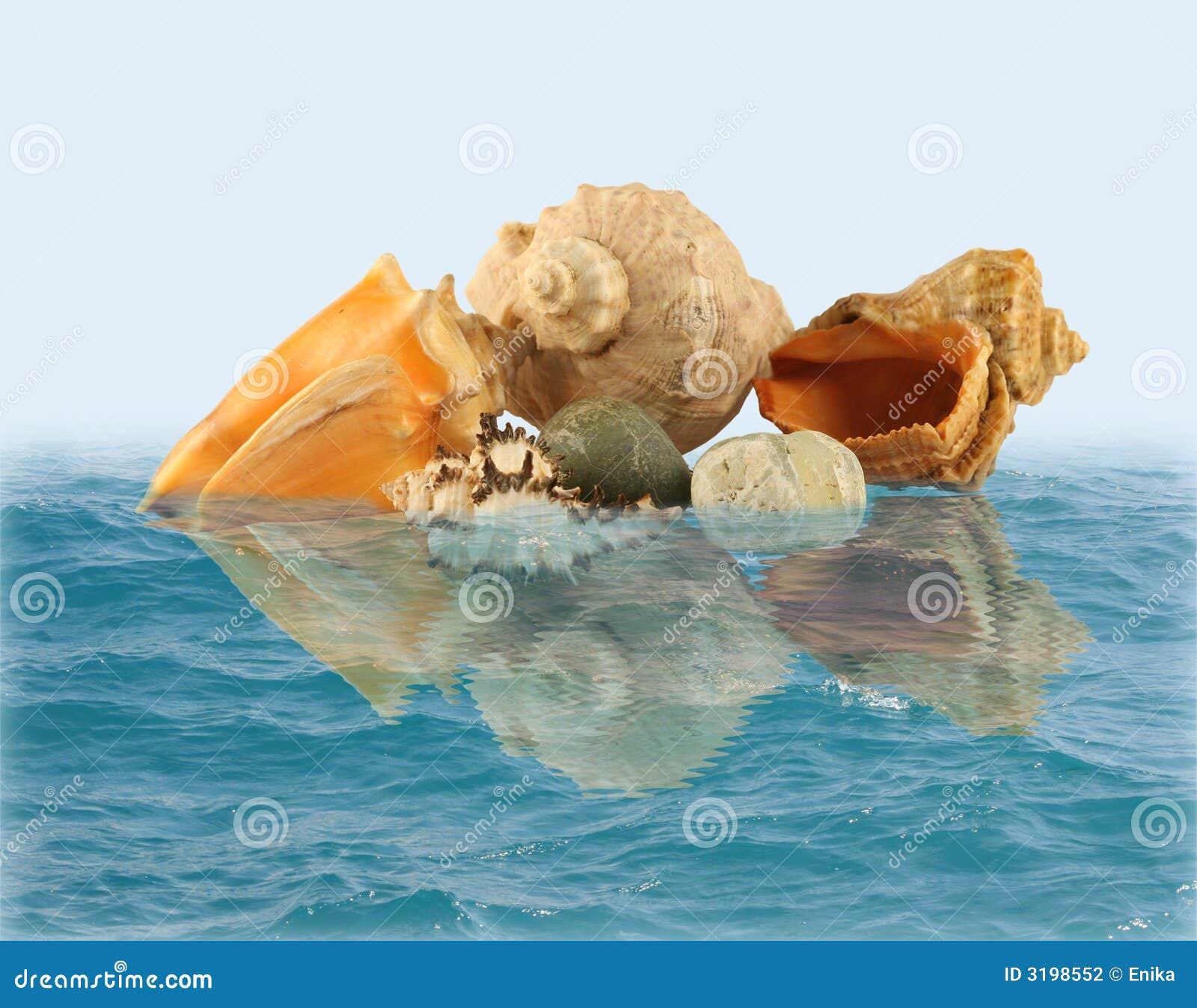 Overzeese shells en stenen in water