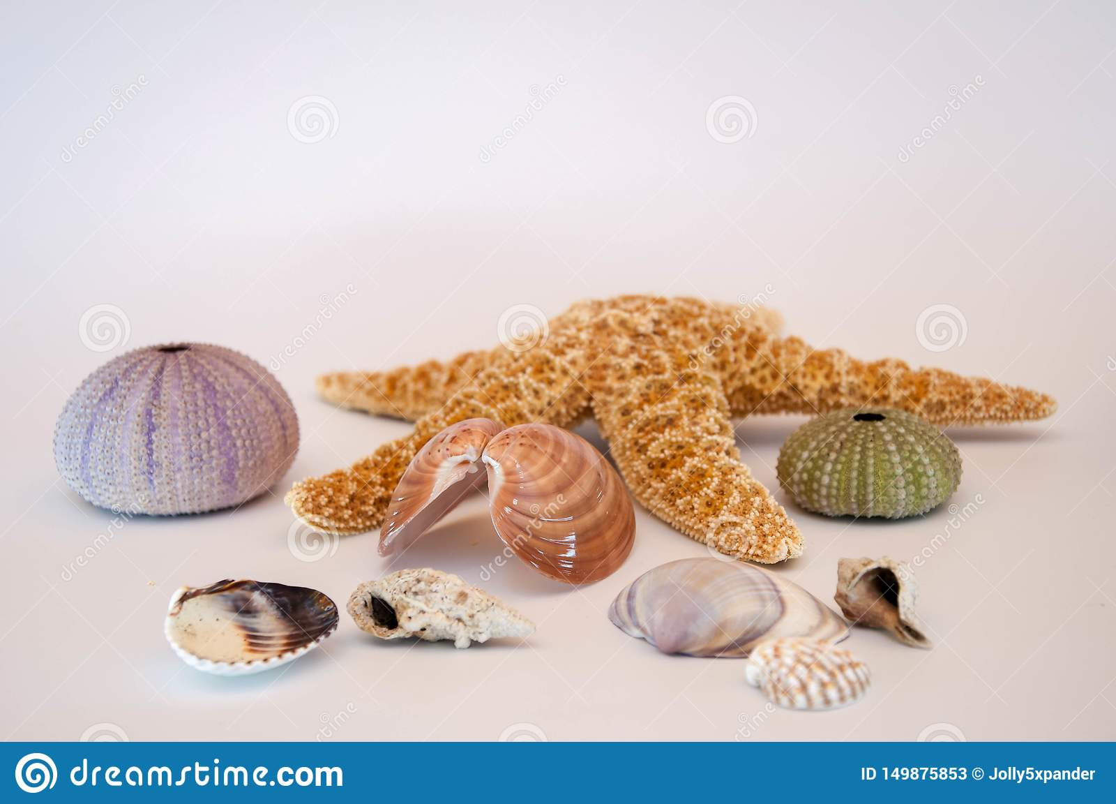Overzeese shells en zeester