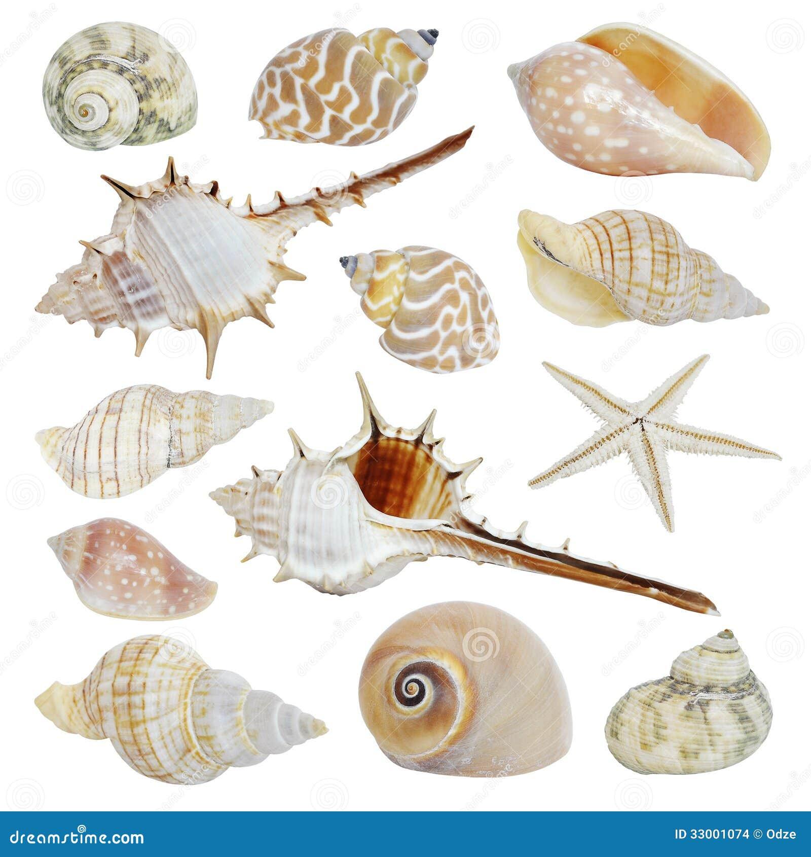 Overzeese shells inzameling