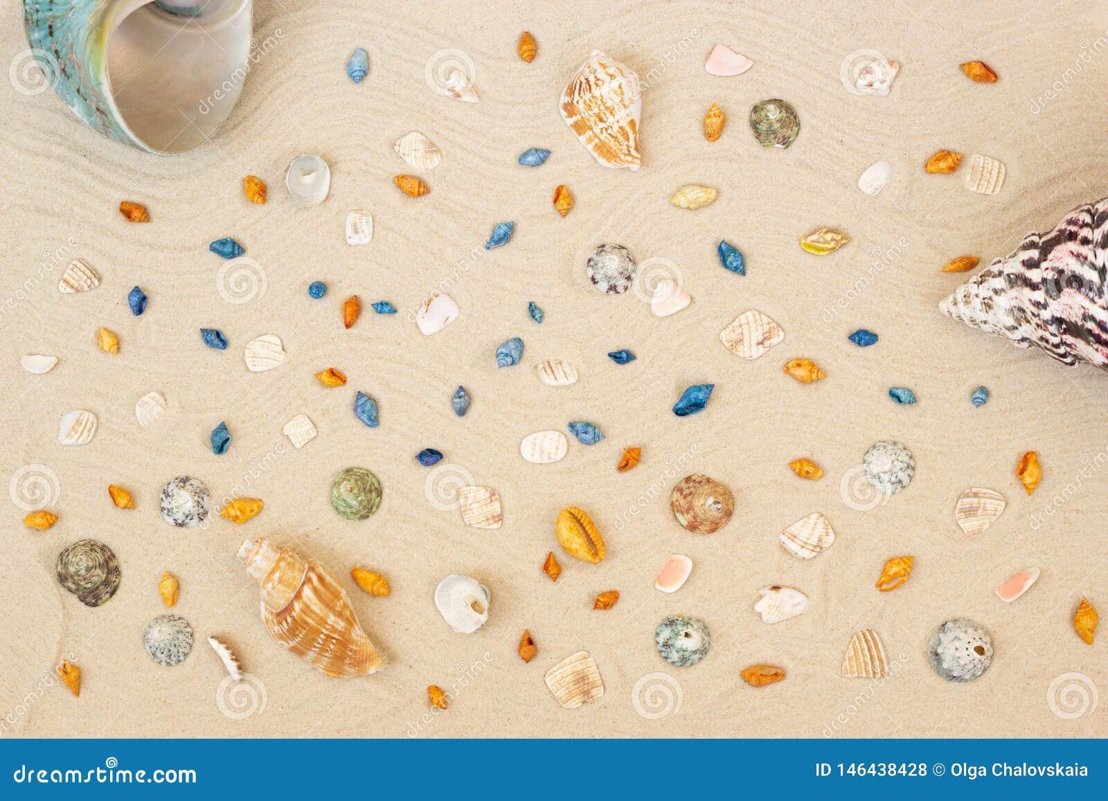 Overzeese shells met zand als achtergrond Vlak leg Hoogste mening