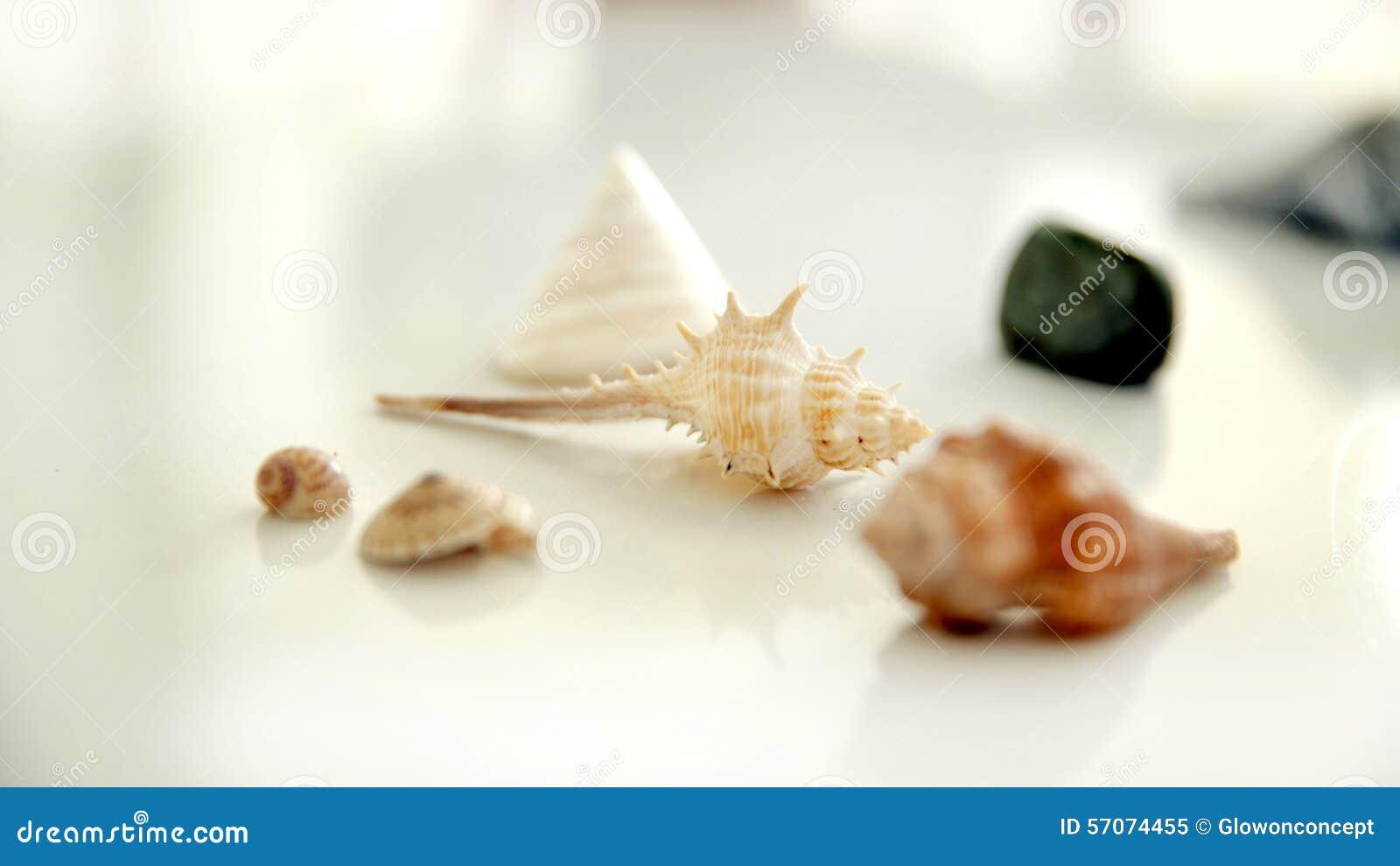 Overzeese shells op witte backgrond
