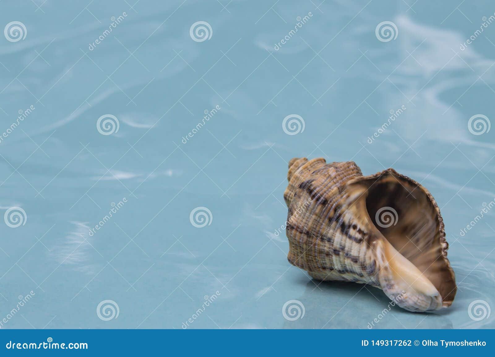 Overzeese shells reis aan overzeese droom en rust dichte omhooggaand