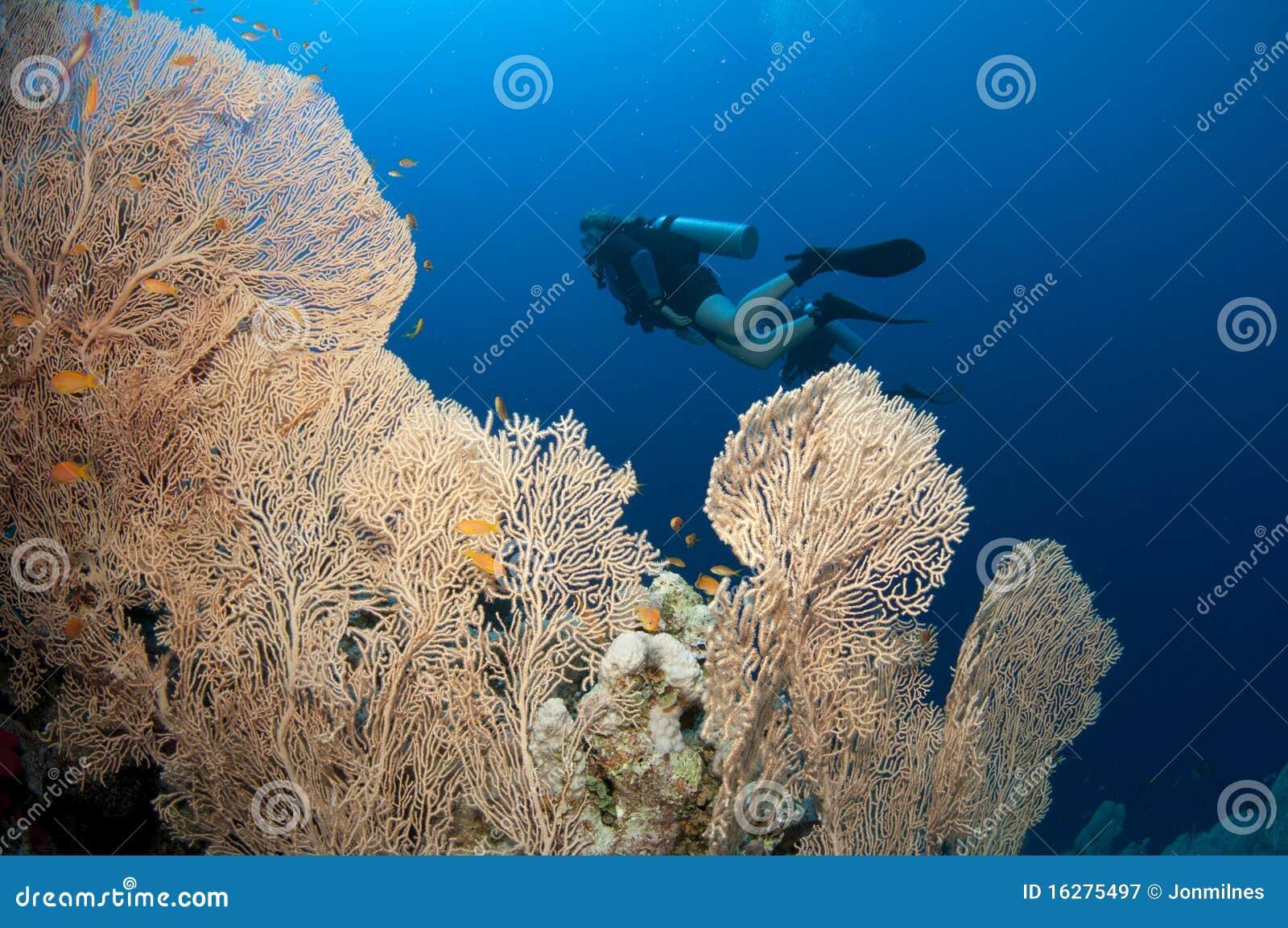 Overzeese van Gorgonian ventilator en scuba-duikers