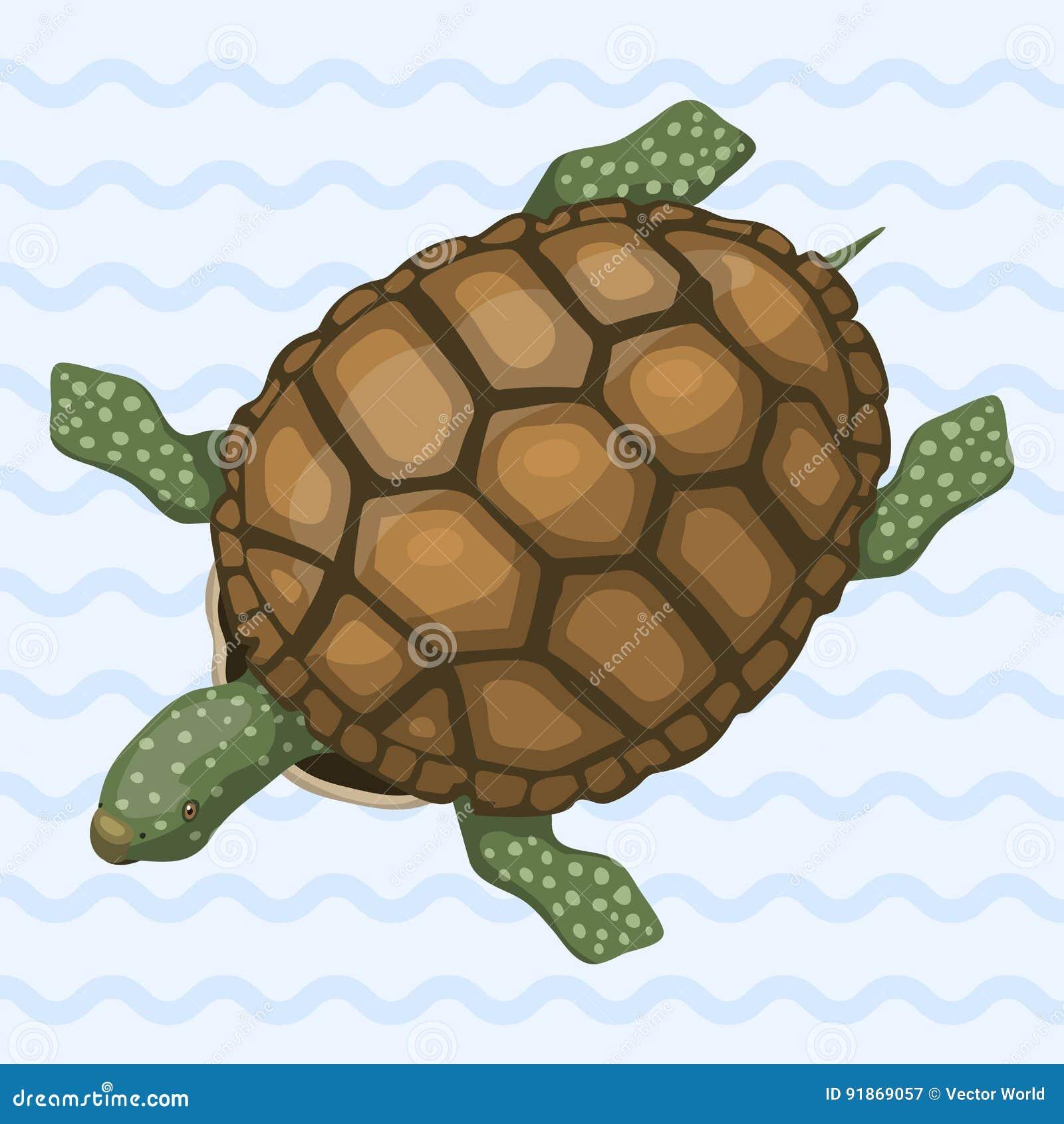 Overzeese van het zeeschildpadbeeldverhaal dierlijke het wild oceaan groene zwemt onderwater reptiel vectorillustratie