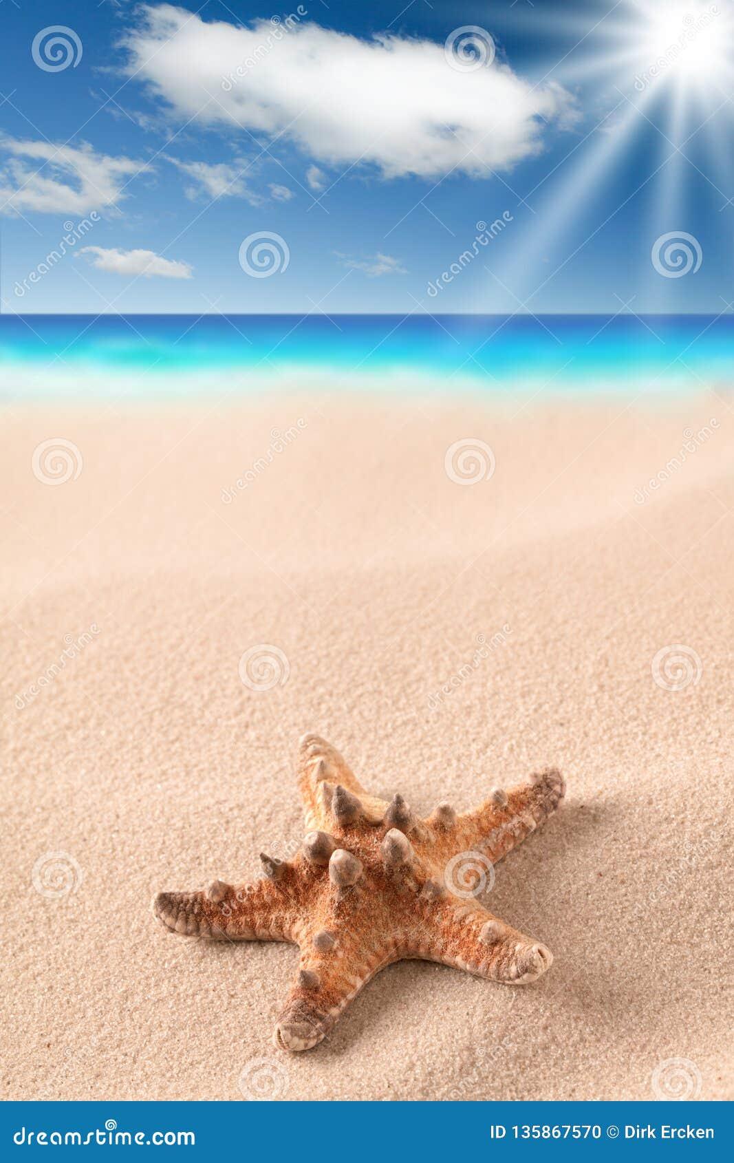 Overzeese zeester op zandig strand