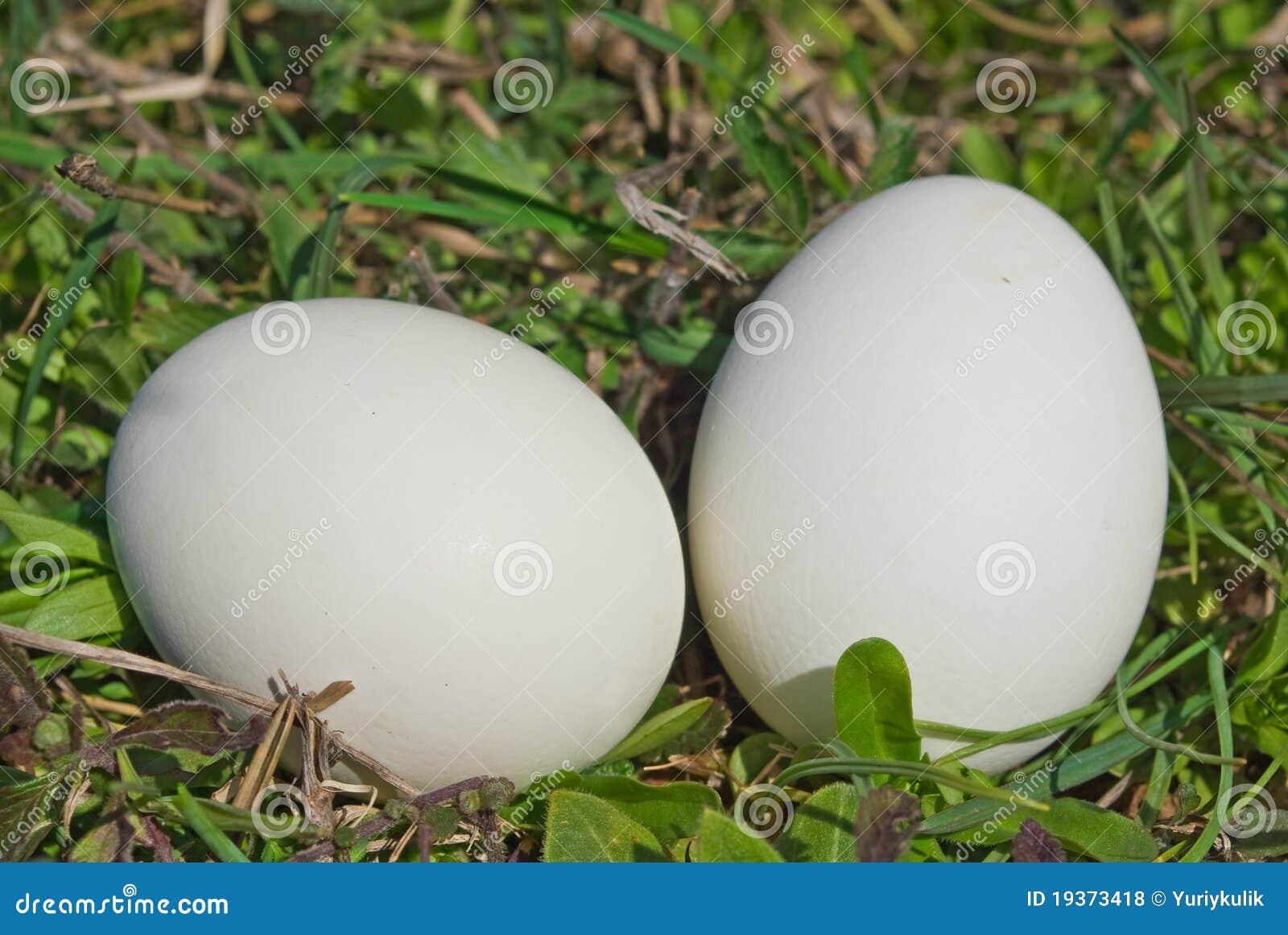 Ovo de dois pássaros em uma grama