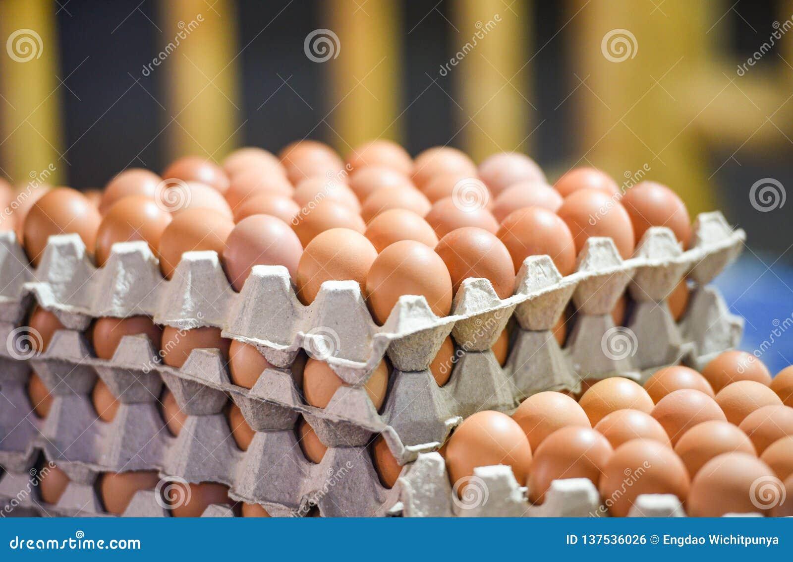 Ovo nos ovos frescos da caixa que empacotam na bandeja da exploração agrícola de galinha