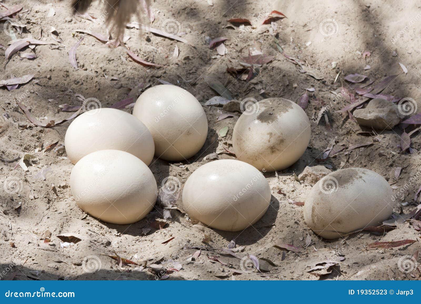 Ovos da avestruz