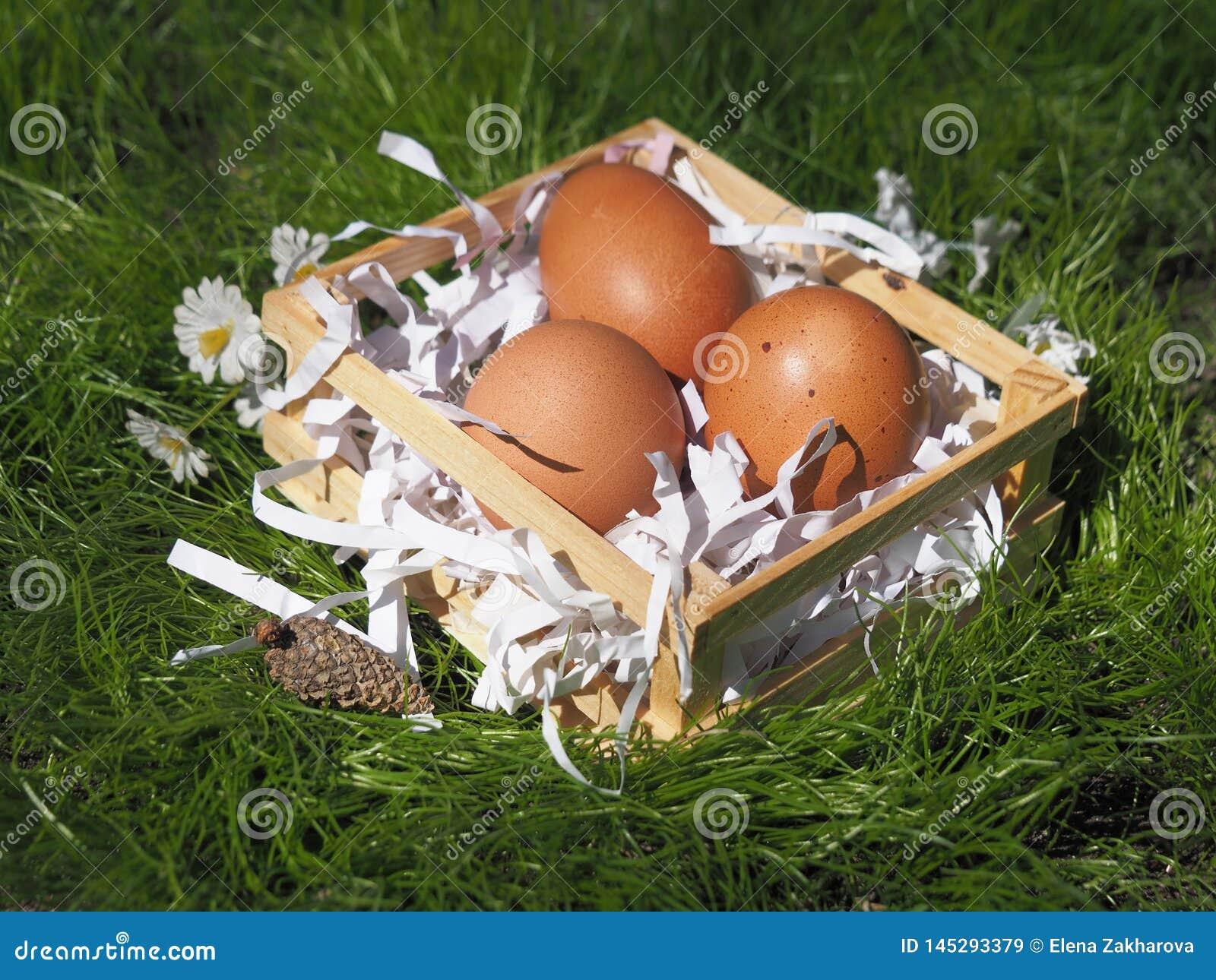 Ovos da p?scoa em uma cesta na grama