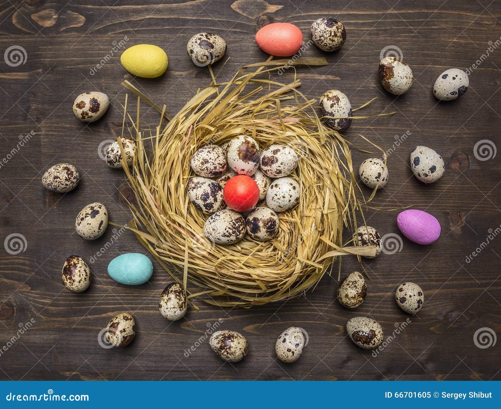 Ovos de codorniz em um ninho com os ovos decorativos coloridos para a Páscoa apresentada em torno do fim rústico de madeira da op