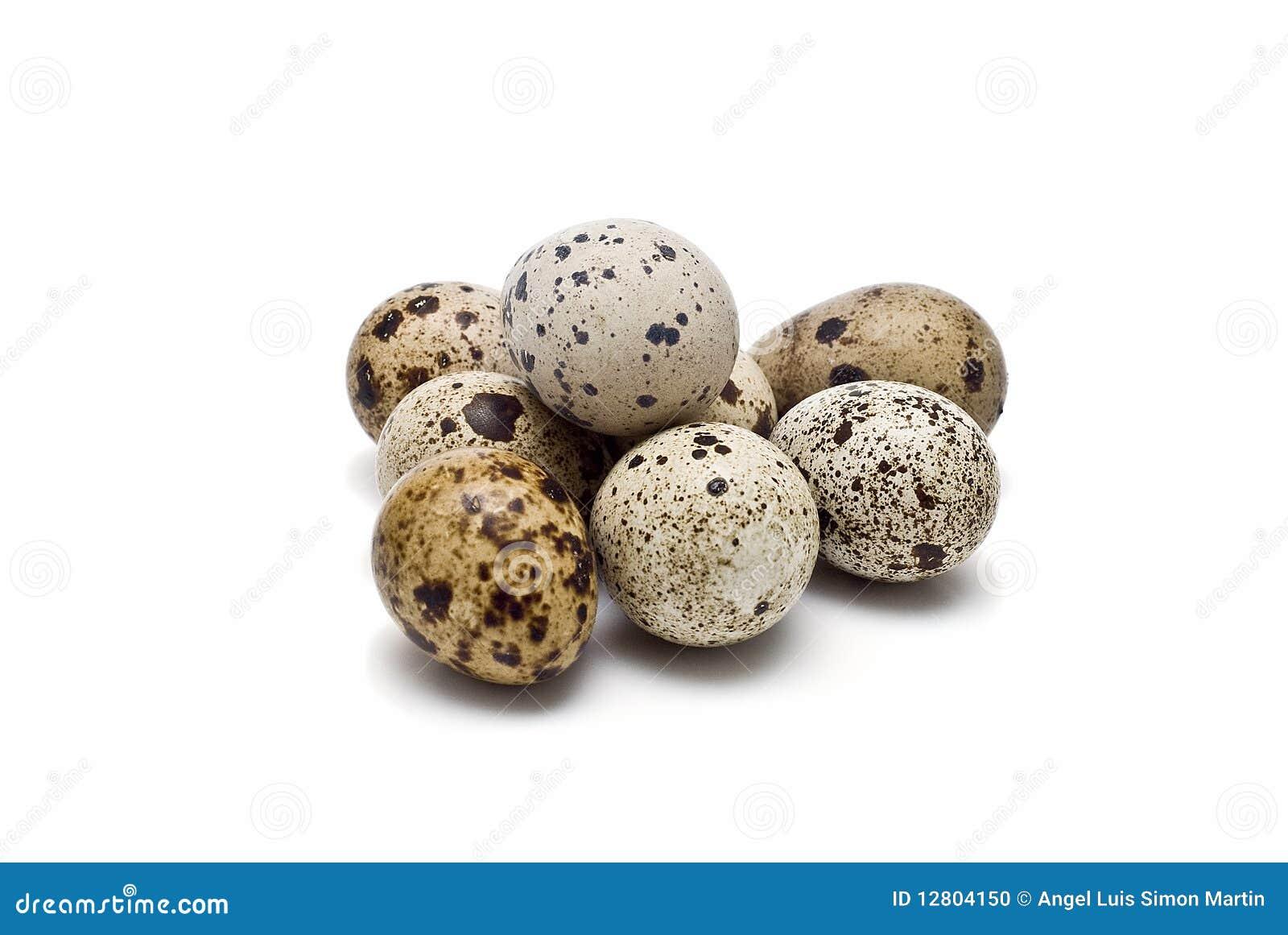 Ovos frescos das codorniz.
