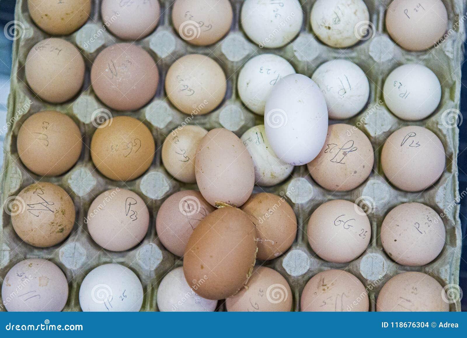 Ovos recolhidos frescos e marcado