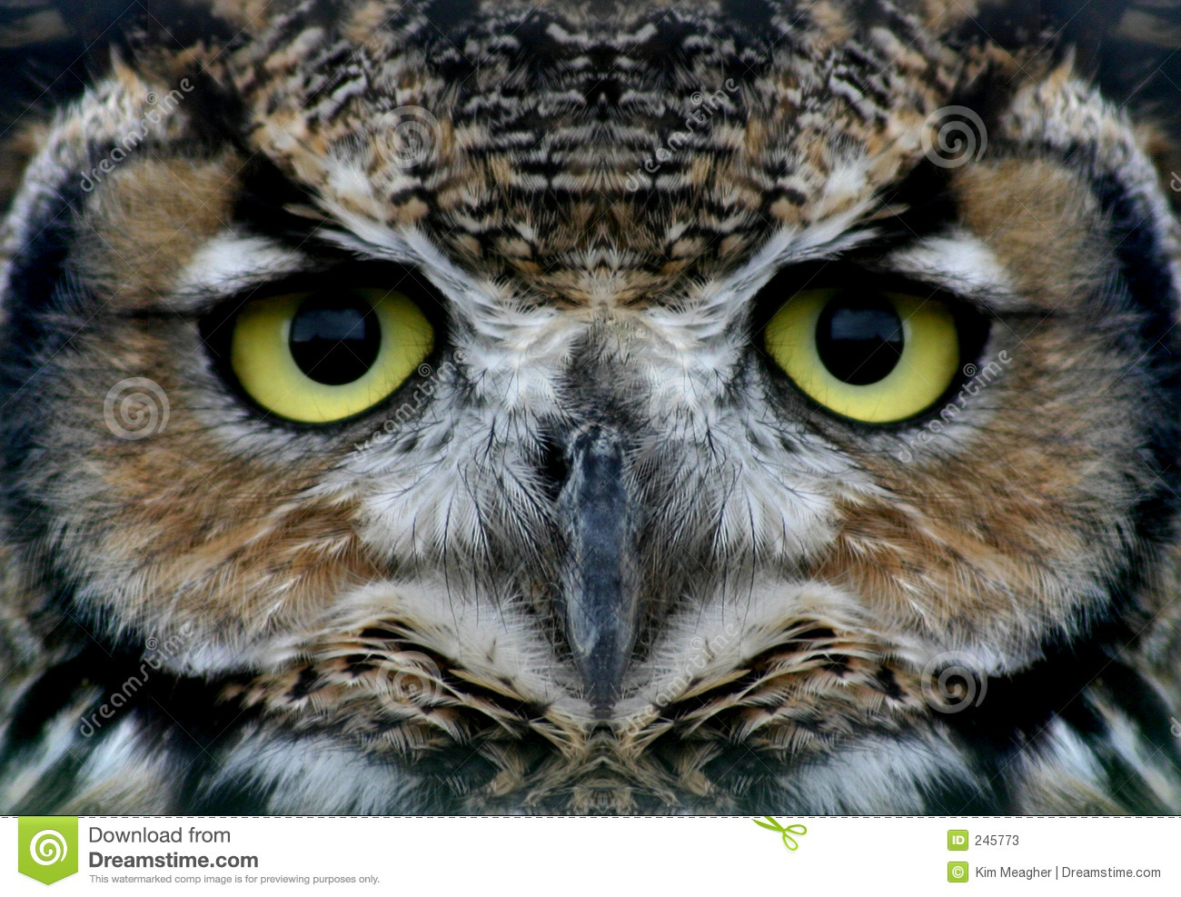 owl stock photos royalty free stock images