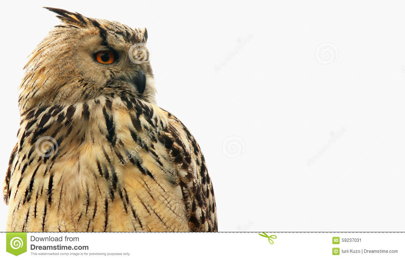 Owl As Symbol Of Wisdom And Knowledge Stock Image Image Of Feather