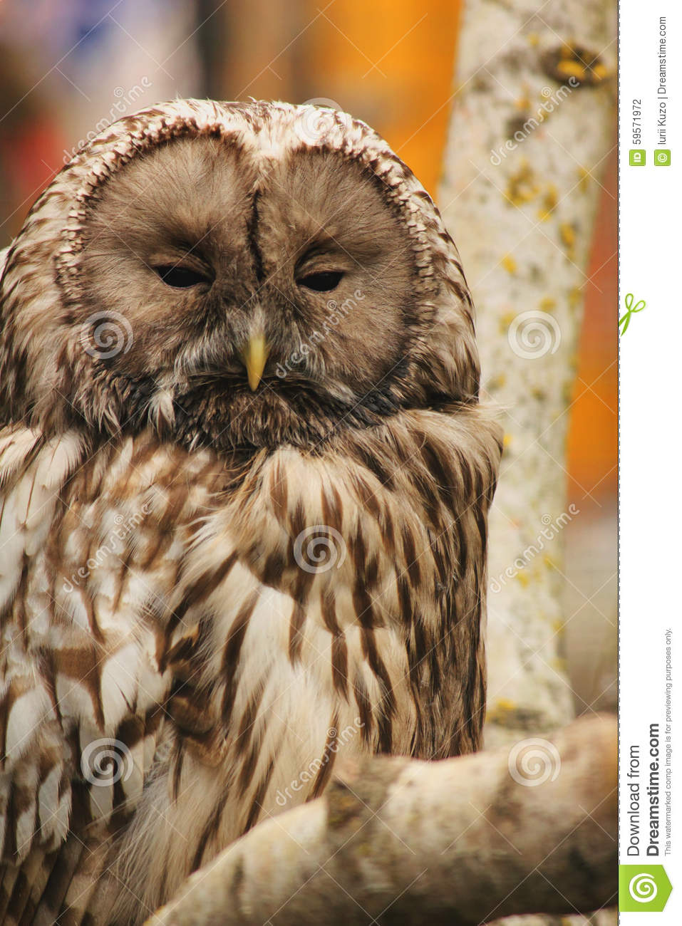Owl As Symbol Of Wisdom And Knowledge Stock Photo Image Of