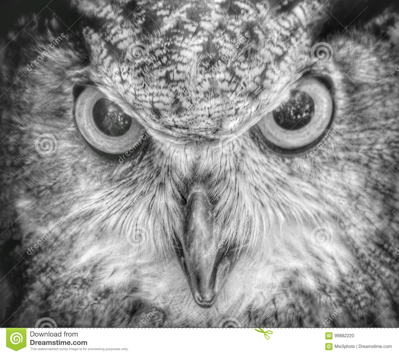 Owl Be Watching You Stock Photo Image Of Beak Starring 99882220