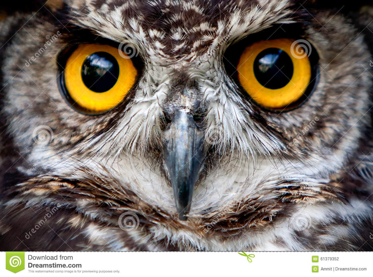 Owls Are The Order Strigiformes Constituting 200 Extant Bird Of Prey ...
