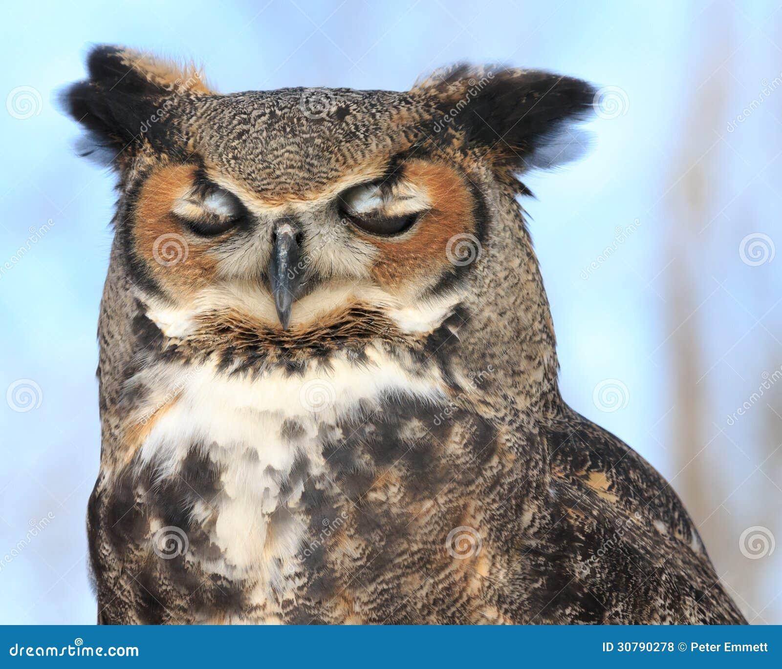 Owl On Blue Royalty Free Stock Photos - Image: 30790278