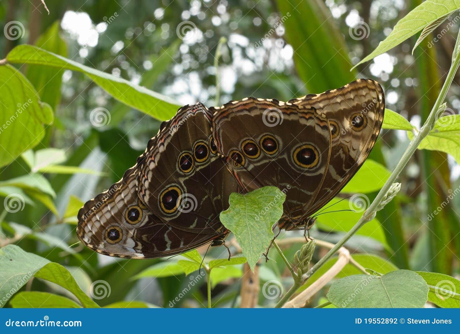 Aphrodite bet at home Bonus zakłady sportowe bet at home drugie konto Fritillary Butterfly Chrysalis