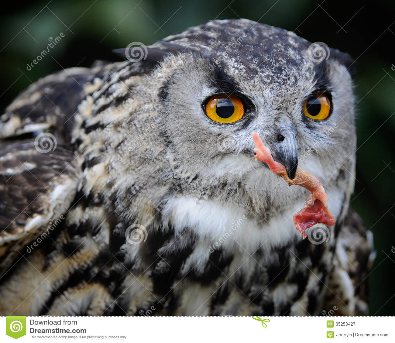 owl catching the mouse - photo #4
