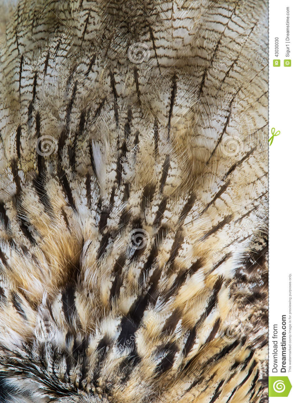 Owl Feathers Texture