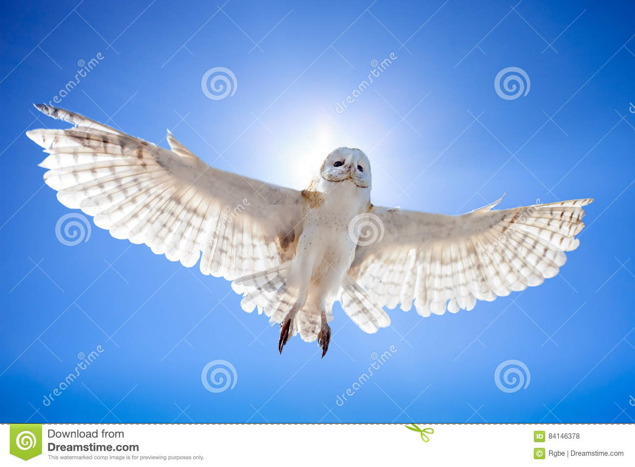 Owl in fly