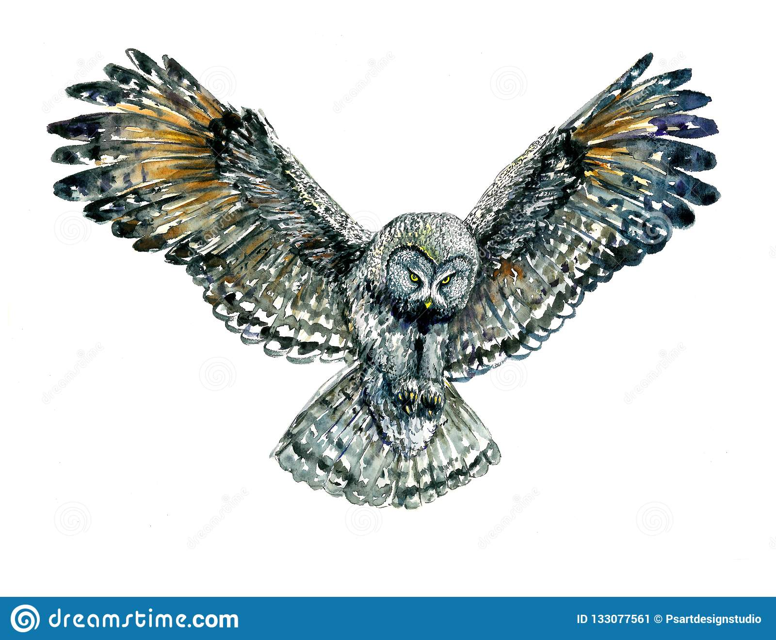 Owl Flying With Whide Open Wings Trying To Catch Something With Its