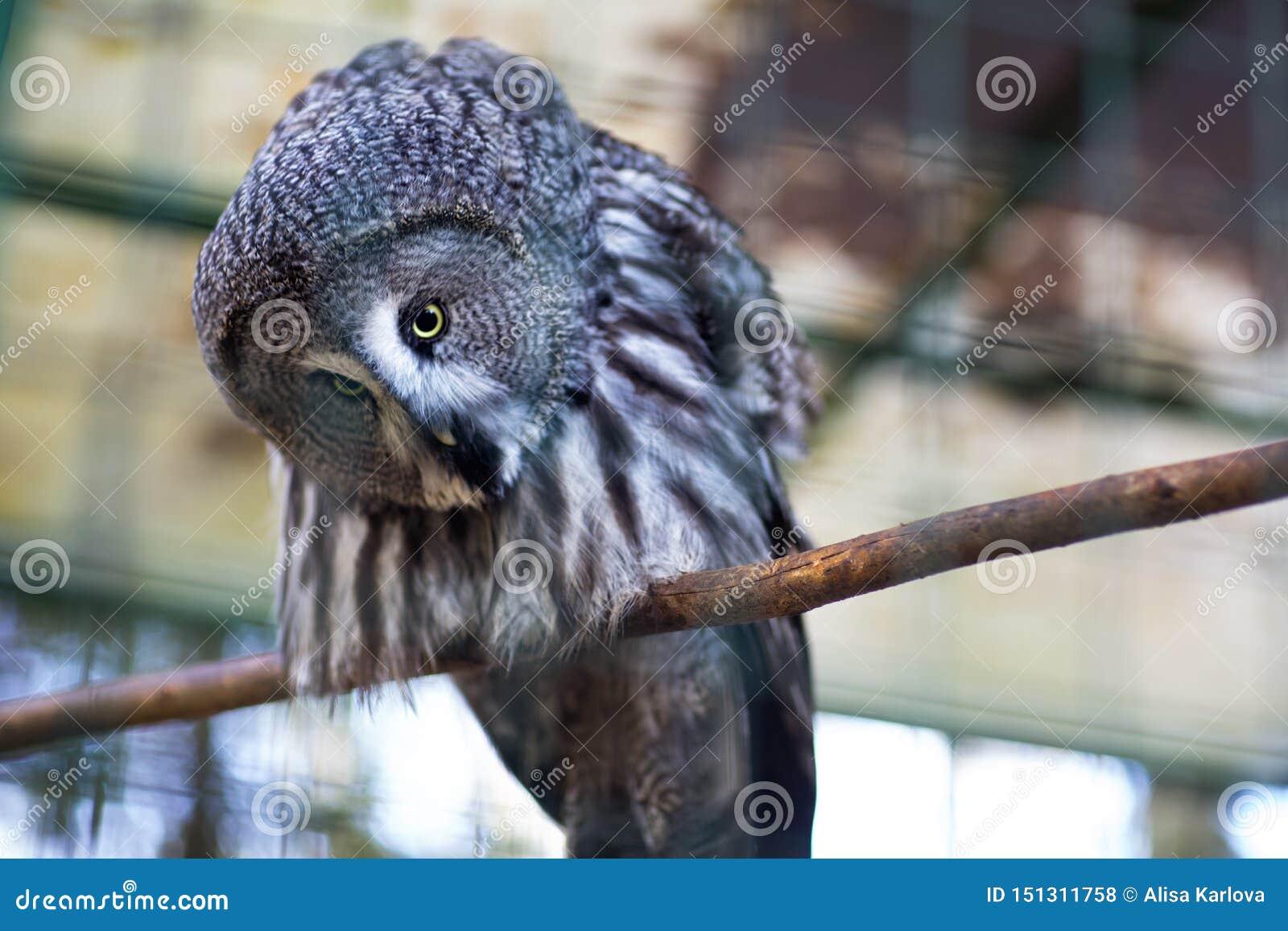 Owl p? en f?rgrena sig